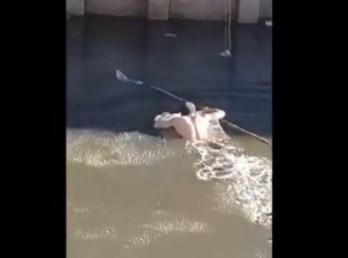 小小貓掉水裡緊抓柱子 壯壯哥抄起手邊大網子跳下:傻孩子有哥罩著你呢~