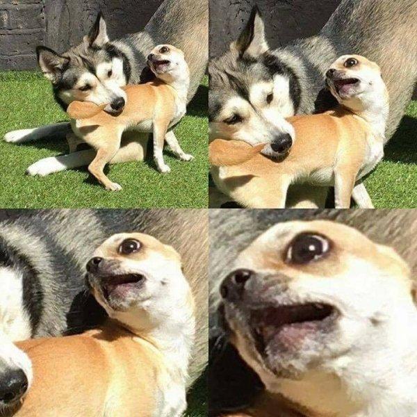 完全沒在管形象!15個「狗狗讓主人爆笑的瞬間」 把自己腳當雞腿啃?