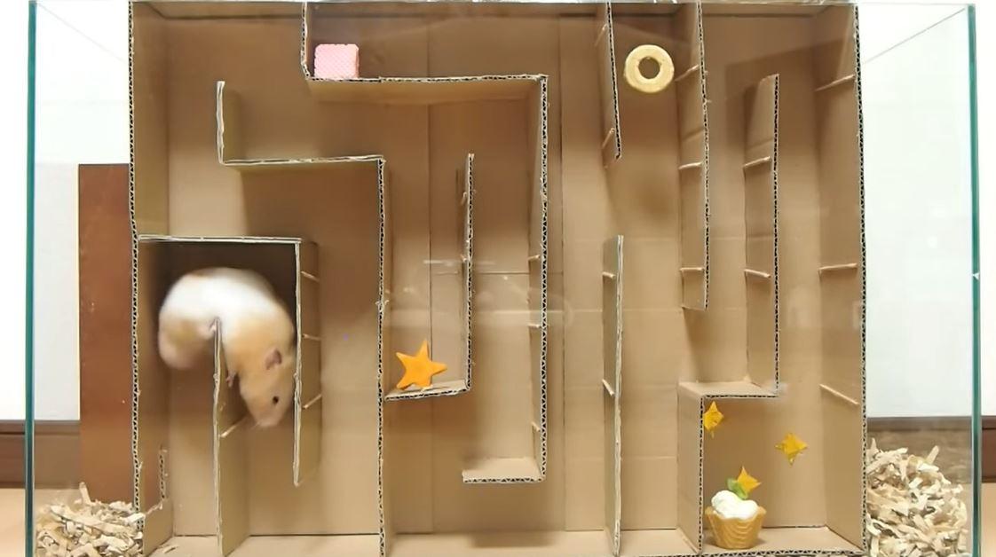 主人打造「倉鼠迷宮」給毛孩挑戰 肥肉被卡住、用蠻力製造出口太可愛♥