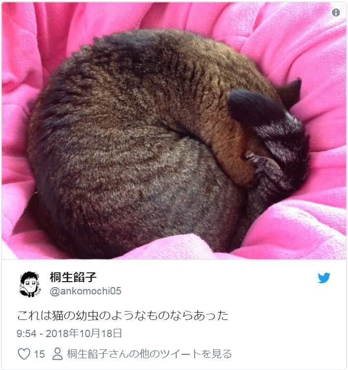 15張連奴才都不知道的「貓的幼蟲照」 橫躺在路邊都可能隨時「孵化成功」XD