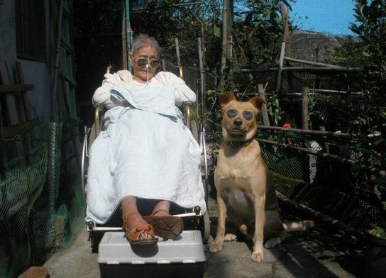 台灣米克斯暖心靠床陪生病奶奶 陸新聞「編故事改寫」讓飼主超心痛:我對不起媽媽...