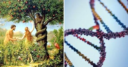 科學家證實「亞當和夏娃」真的存在 連動物也是他們生的
