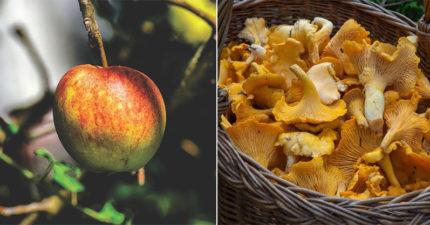 12種「一不小心就會奪走你生命」的日常食物 吃蘋果時一定要注意蘋果籽!