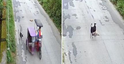 狗狗「被車壓過」沒人理 唯有小夥伴「拼命猛推」:快醒來QQ
