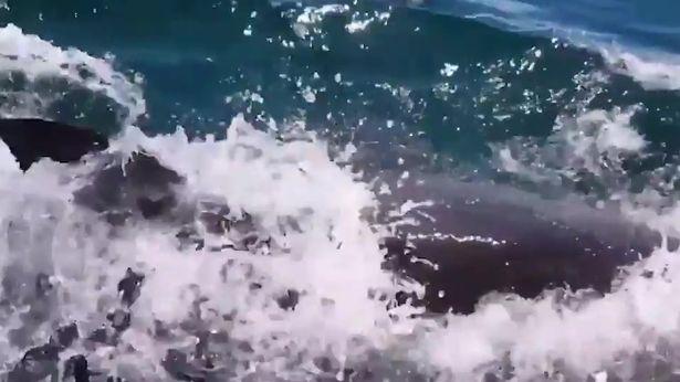 釣客開心PO網「有海豚偷吃我的魚」 網友神回:牠想吃的是你