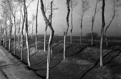 10張老照片一窺1942年河南大饑荒!人民「餓到只能啃樹皮」 走到一半倒地都只是日常...
