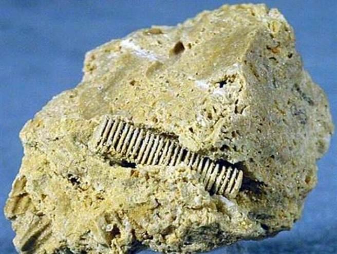 3億年前「螺絲釘」從俄羅斯深海被挖出 神秘規則螺旋重新定義史前文明時間軸!