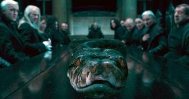 《哈利波特》早暗示娜吉妮成為分靈體過程 悲慘身世是「依附佛地魔」關鍵!