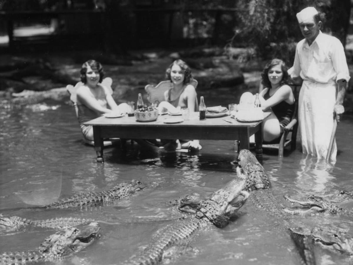 15張證明「古人生活比你更精彩」的珍貴老照片 和鱷魚一起喝下午茶是基本的!