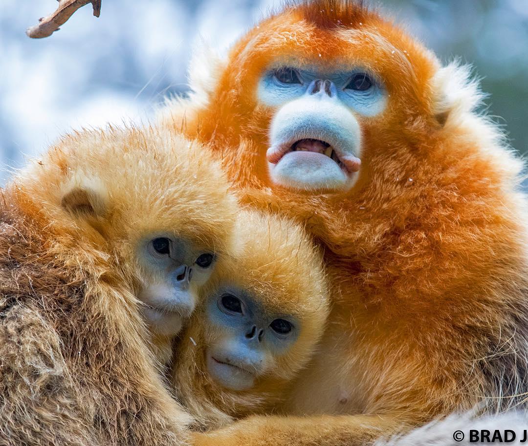 21張「醜到你會抱著你媽哭」的動物照 但其實牠們比你女友還溫馴❤