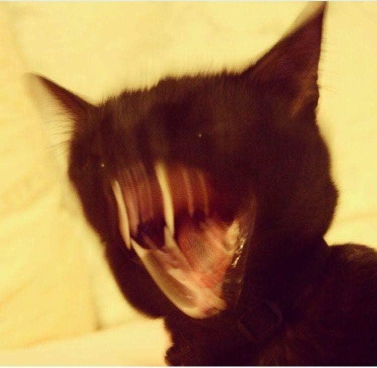 18張鏟屎官珍藏的「貓咪世紀醜照」 卡在杯子裡面的比卸妝網美還可怕...
