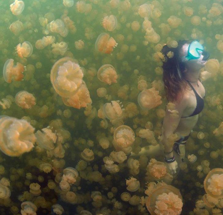 32張讓你看到「差點忘了呼吸」的衝擊感官驚奇照 拿著6把刀的章魚?!