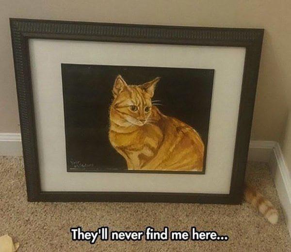25張「來自上帝的惡作劇」地獄級巧合照 貓咪遇見未來的自己?