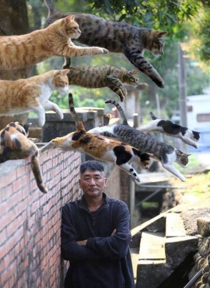 26張讓你「好像有點懂又不懂」的詭異照片 當天空真的下起貓雨你也只能閉嘴等停!