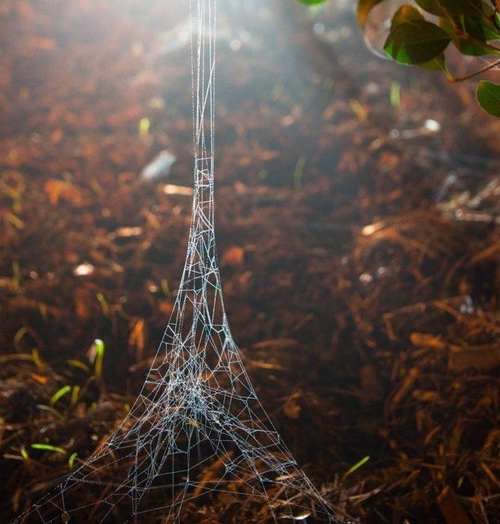 27張連老天爺也沒辦法預料得到的「驚人巧合照」 像巴黎鐵塔的蜘蛛網!