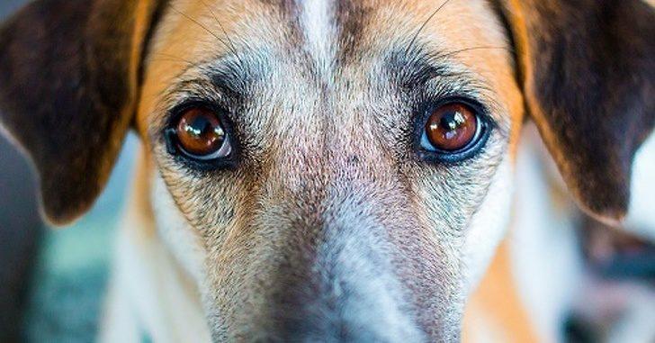 別以為牠很傻!科學家發現狗狗「擁有判別壞人能力」 寧可挨餓也不吃非善類給的食物...