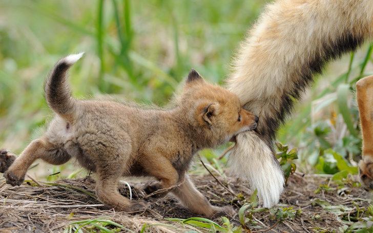 天下的媽媽一樣辛苦!21張已經完全受夠孩子的「厭世動物媽媽照」