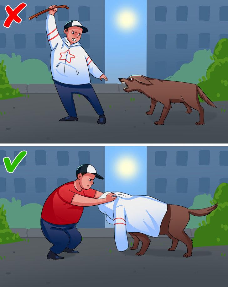 16個被狗狗攻擊時「能保你一命」的重要知識 想活命就千萬別在狗面前跑!