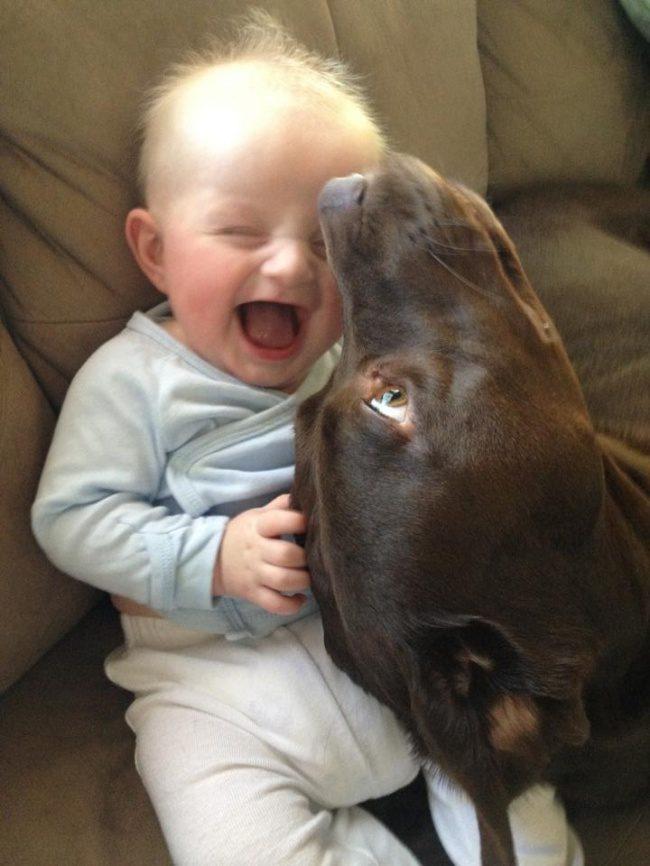 26張證明「善意並沒有被惡意打敗」的療癒溫暖照 狗狗當爸爸後也會一臉驕傲呢!