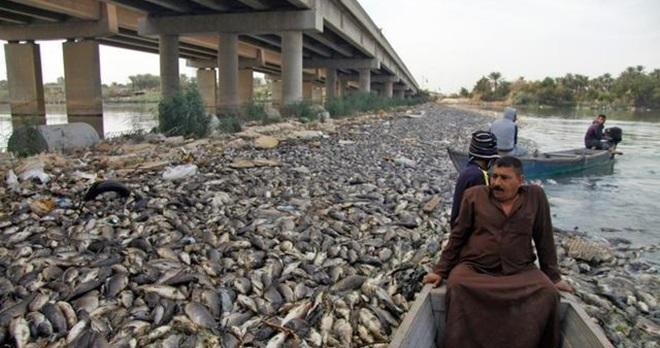 一夕之間上萬鯉魚離奇翻肚 塞滿「幼發拉底河」兩岸…竟是神祕北緯30度在搞鬼