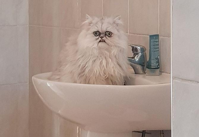 開眼貓「凸眼癡呆」被網友笑P圖過頭 本尊貓一現身鄰居傻眼:這孩子是有多驚訝啦XD
