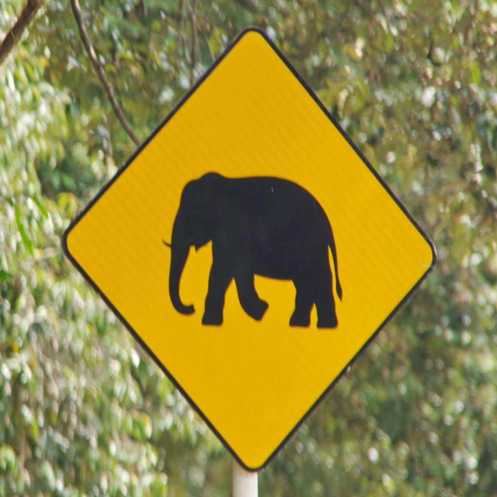 一路超速沒看警告!三寶遊客野生公園裡狂飆 被暴走的大腳「當場踩成肉餅」