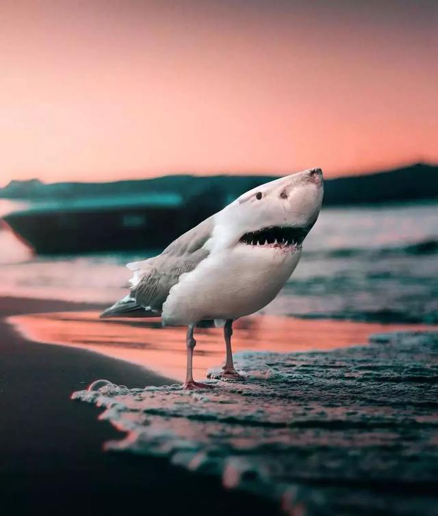 18個「腦袋神經接壞了」的幽默照 鯊魚+麻雀=海陸空最派的動物!