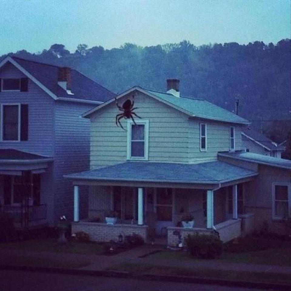 20張需要「再看一遍」的荒謬錯覺照 巨大蜘蛛攻陷鄰居的房子!