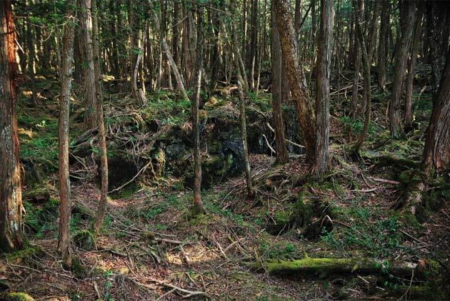 日本都市傳說!每年人口都減少10萬人 走進邊界森林驚見「最原始貧民窟部落」