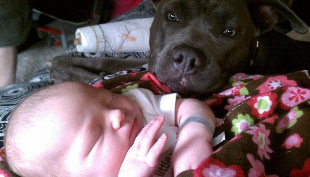 嫉妒的危機?父母放手「讓新生兒跟狗狗獨處」 照片卻證明大部份人都想錯了