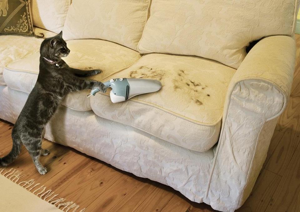 興趣是「做家務」的貓貓狗狗!幫忙通馬桶的喵星人太可愛啦❤