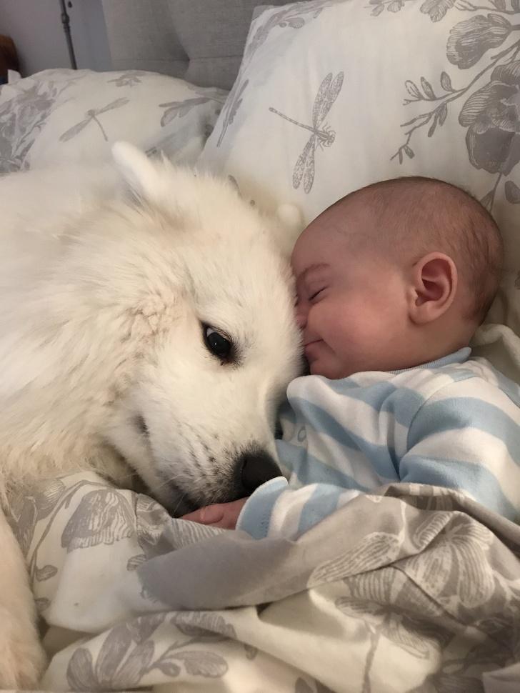7個狗狗能證明自己「不是小廢物」的隱藏專長 用鼻子聞就知道你有沒有懷孕!