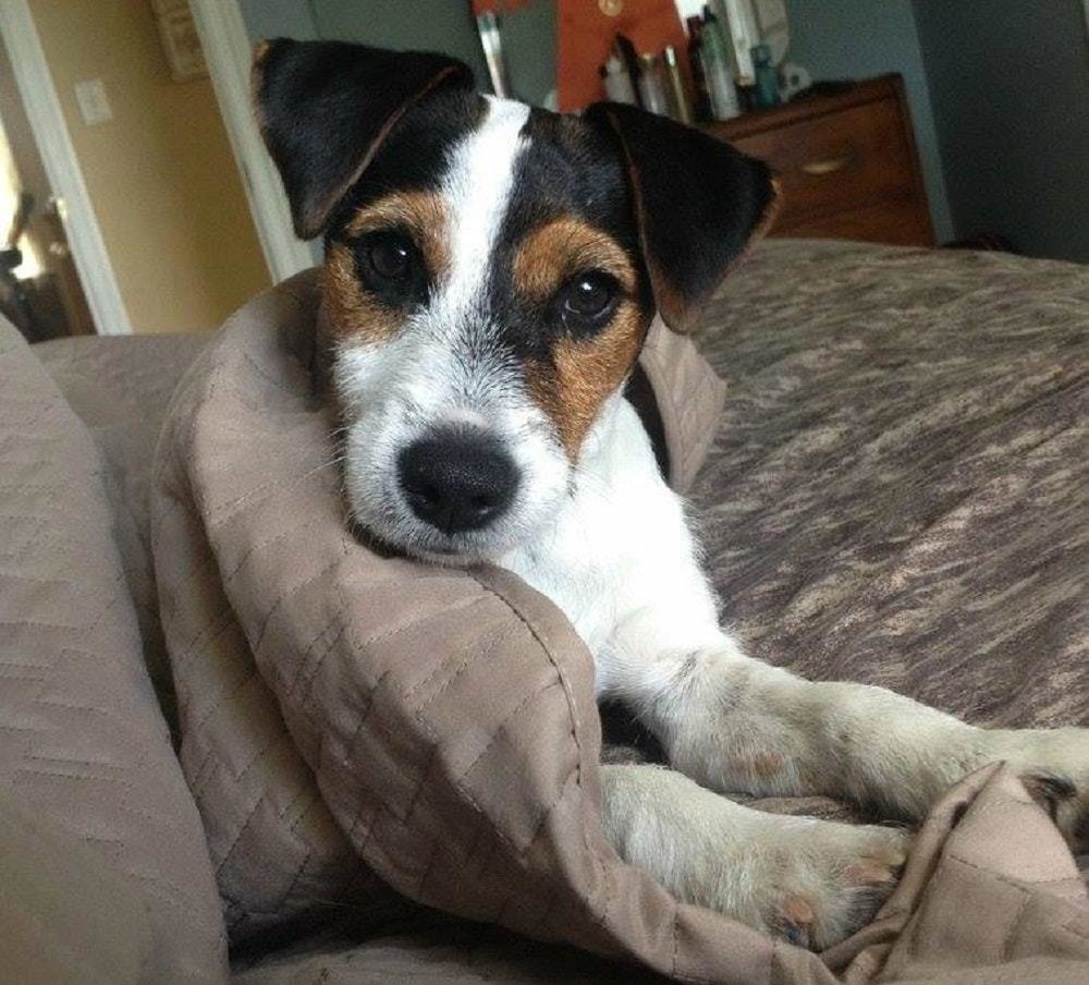 以為愛犬已經離開大家 當家人埋入土堆...14小時後聽到「最熟悉汪汪聲」根本萊西翻版!