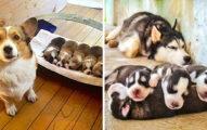 20張說明「天下的媽媽都是一樣的」動物母子照 看睡姿就懂遺傳不會騙人!