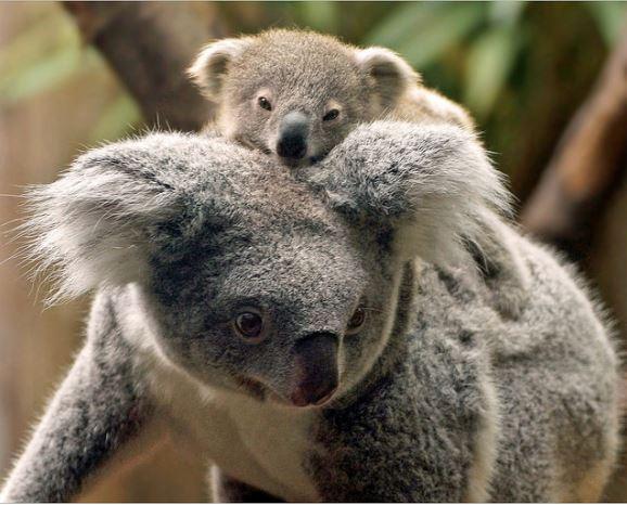 25張讓你「生命值1秒充回滿格」的溫馨動物親子照 額頭花紋都完美複製♥