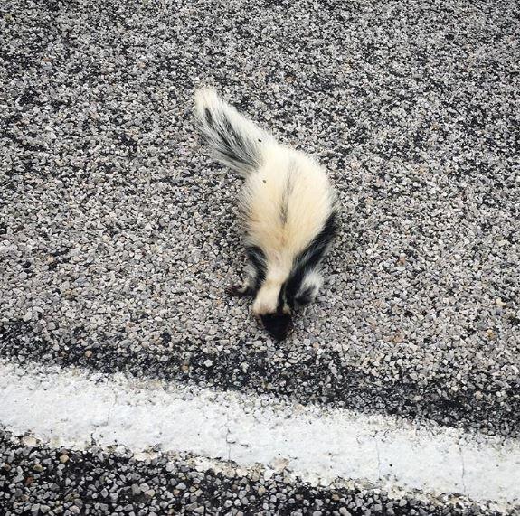 22個「花色斑紋超特別」的動物美照 大貓熊褪色之後看起來還是很想睡XD