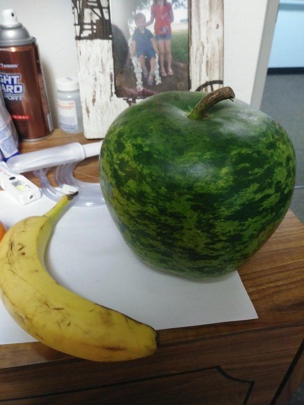 15張讓你直覺「我絕對有在哪裡看過」的荒謬照 長著西瓜紋路的蘋果其實是南瓜!