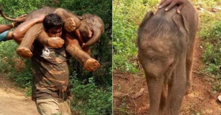 大洪水肆虐小象溺水活不了 男子靠吃奶力氣扛起90公斤小小象:我們回家吧!