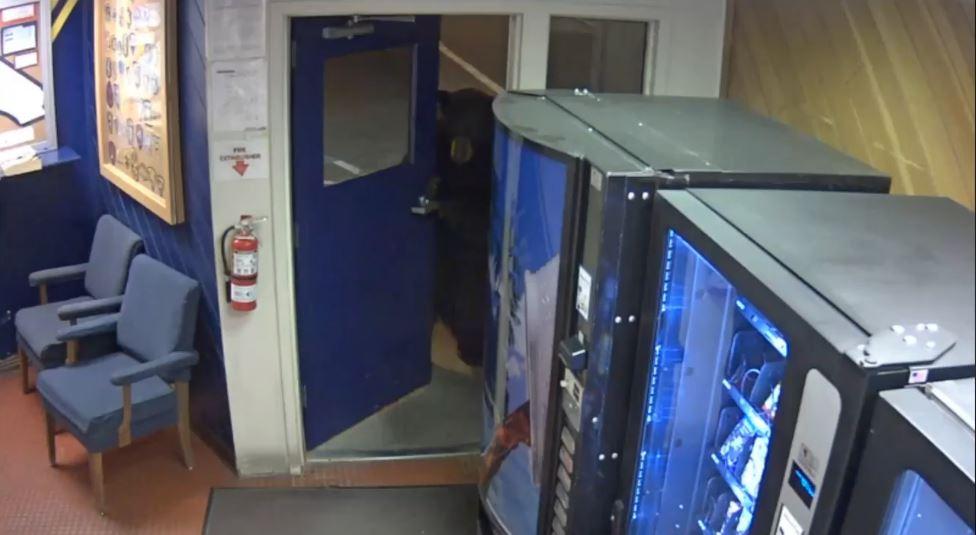 警局大門遭「黑色巨大怪物」輕輕轉開 一看還「雙腳站立」網嚇壞:不可能!工讀生快出來