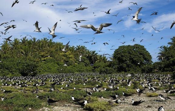 地球上10個「有飛機都不一定到的了」的小島 擁有1億克拉鑽石的島連命都可能賠上