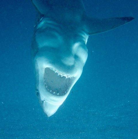 20張保證全天然沒修圖「最驚嚇到掉下巴」照片 鯊魚的肚子底部...到底是被什麼附身