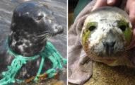 小海豹受傷上岸求救 無知遊客「直接仍回大海」動保團2天後找到:牠走了...