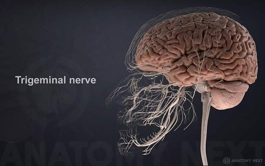 11個證明「人類是上帝的傑作」的器官冷知識 肝臟擁有500多個功能...難怪一顆這麼貴!