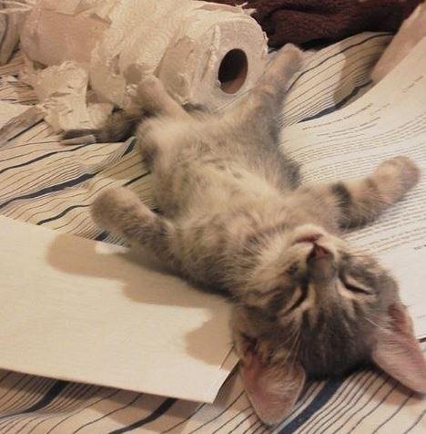 13張「你勉強會覺得牠們是天使」的貓咪睡覺照 邊睡邊展現水一樣的軟骨功...根本上演大法師!