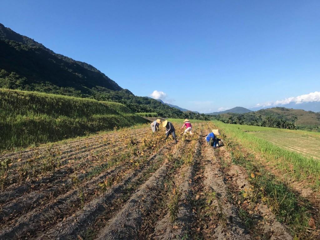 5個「沒有網紅」的花蓮私密必訪景點 吉籟獵人學校教你「用森林變出一桌菜」