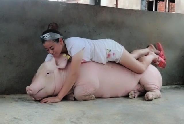 正妹天天睡覺的床伴「打呼到你會翻臉」 24小時當小豬看守員...現在男人連豬都不如啊XD