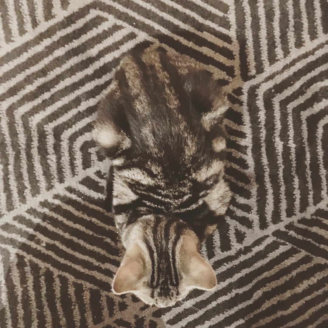23張「動物都會神奇隱身術」的錯覺照片 貓咪與階梯完美結合…主人差點一腳踩下去!
