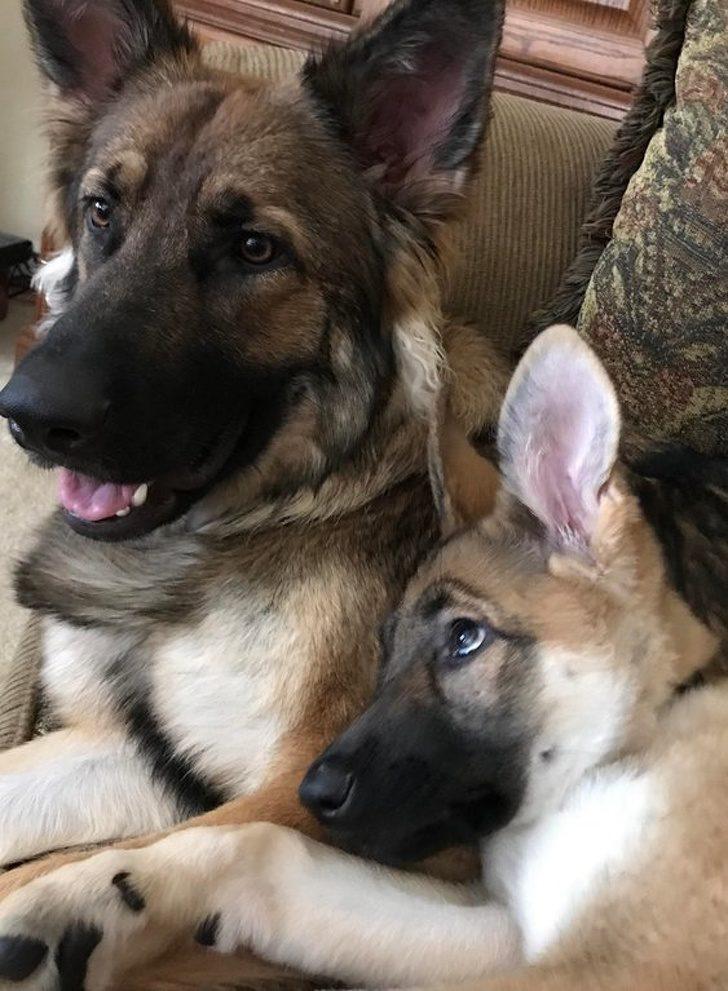20張貓貓狗狗絕對是「是世界上心機最重的生物」 牠們永遠會搶走你最重要的人生風采!