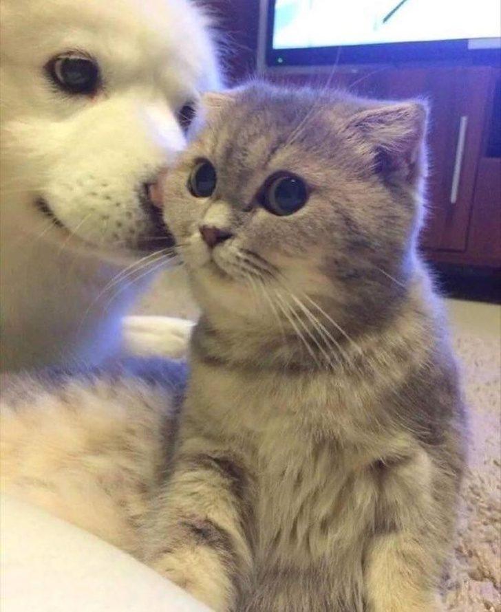 21張證明「毛孩都是工讀生假扮」的中肯萌照 女友眼神貓讓人直接戀愛!