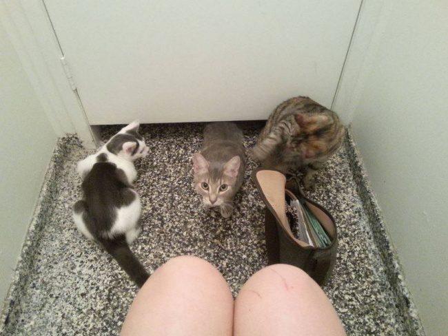 15張現在你還來得及回頭的「絕對不要養貓」原因 連男友都直接被偷走啦~